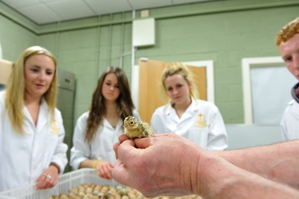 Students examine the latest brood of hatchlings