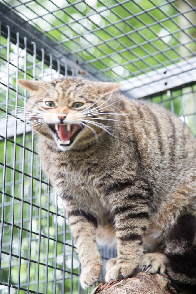 Scottish Wildcats at Myerscough College